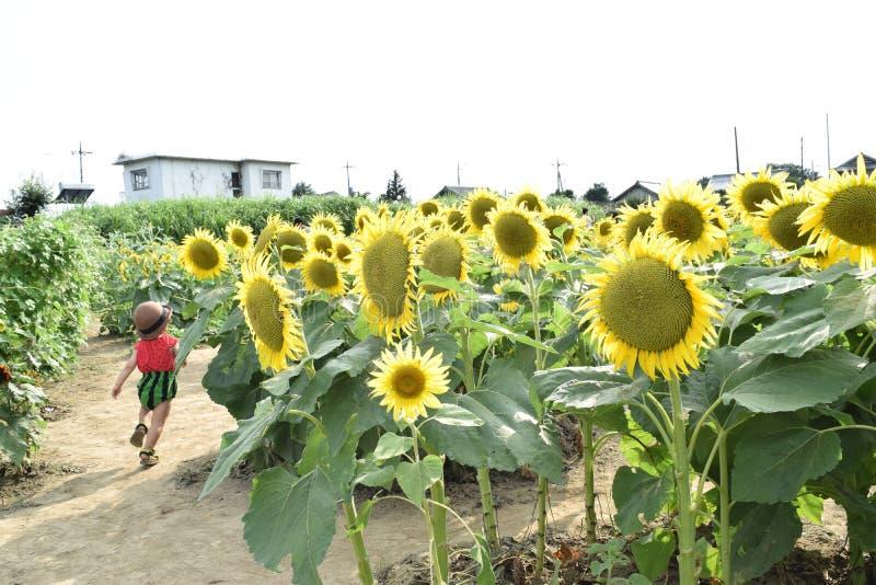 A criança bonita é em torno das férias de verão da flor do sol imagens de stock royalty free