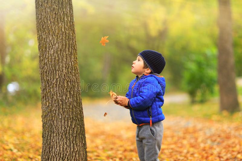 A criança bonita trava as folhas de bordo na queda durante o outono imagem de stock royalty free