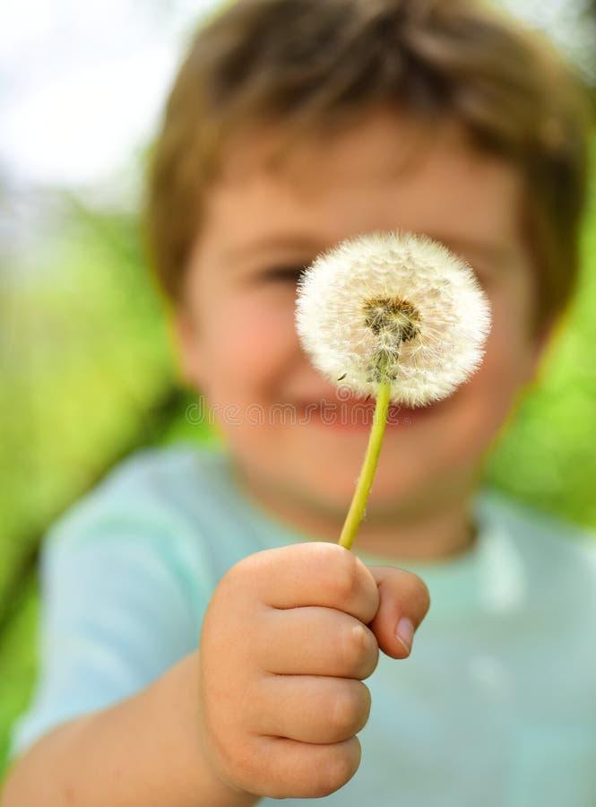 A criança bonito mostra uma flor do dente-de-leão, uma mola e uma natureza bonita Inf?ncia na natureza Alegria do ver?o Fundo bon imagens de stock
