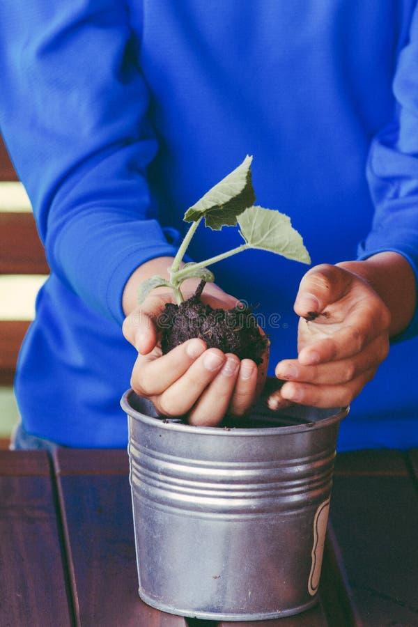 Criança bonito pequena que prende a planta verde nas mãos fotos de stock