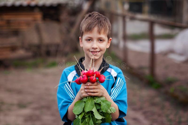Criança com o rabanete orgânico fresco nas mãos Alimento saud?vel imagens de stock