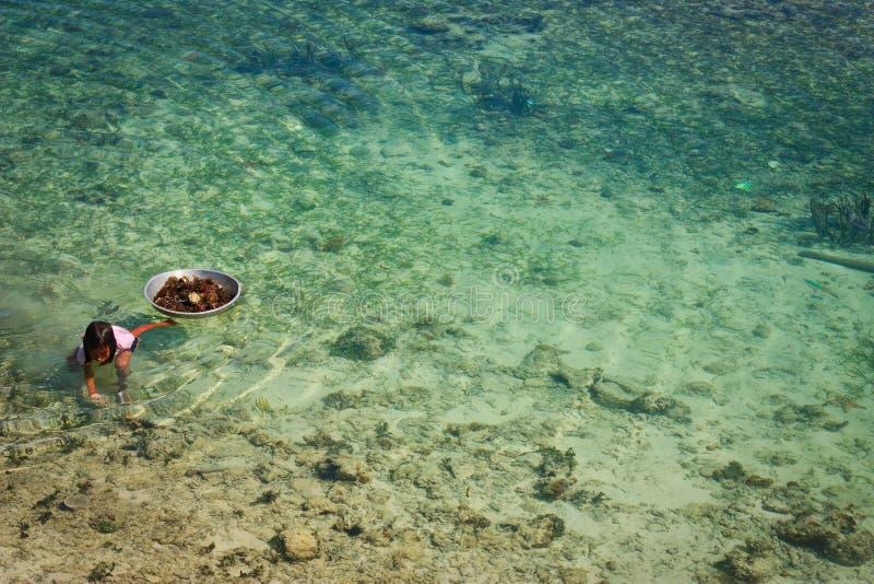 Criança da ilha de Mabul que procura pelo diabrete de mar imagens de stock royalty free