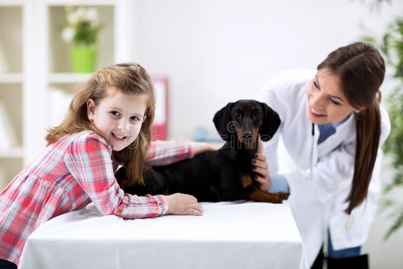 Criança de ajuda do veterinário com cão imagens de stock