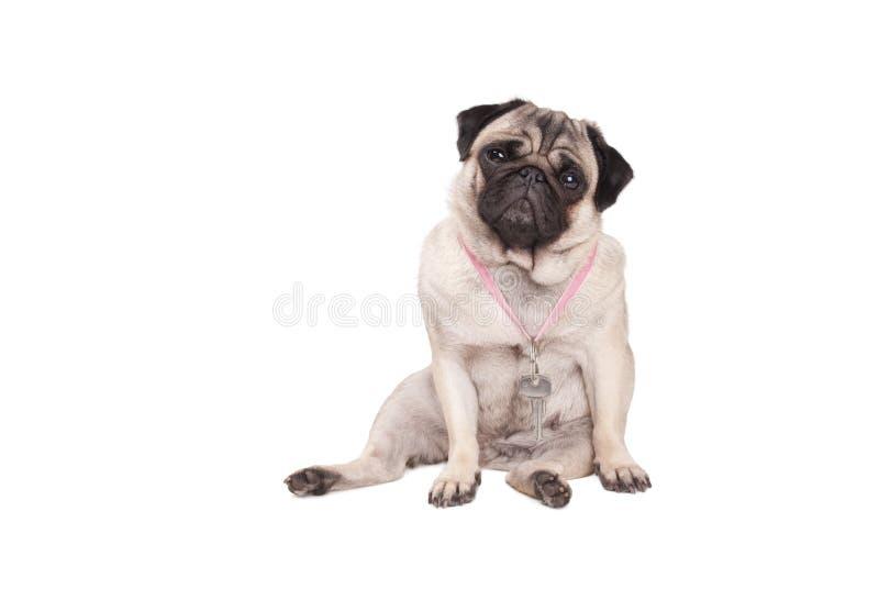 Criança de chave, keycord vestindo de vista triste do cachorrinho do cão do pug com chaves em torno do pescoço fotografia de stock royalty free