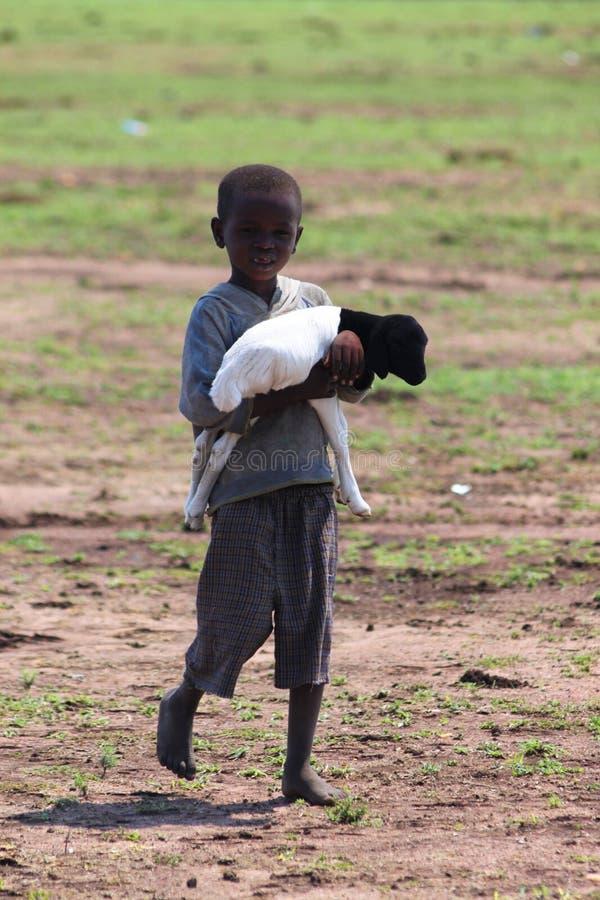 Criança do Masai com um carneiro pequeno fotos de stock