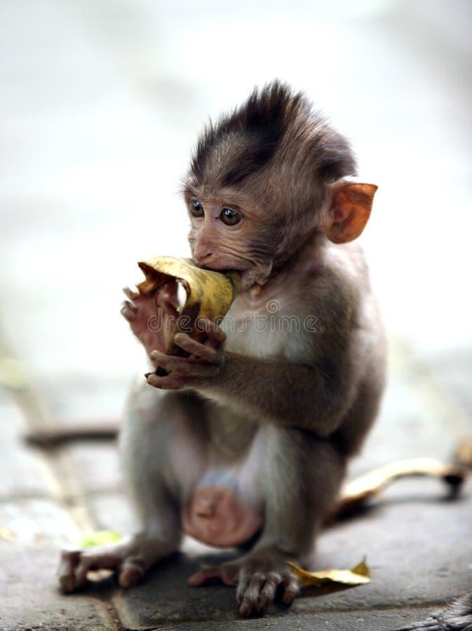 Criança dos macacos foto de stock royalty free