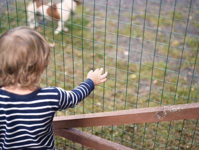 Criança e cão fotos de stock