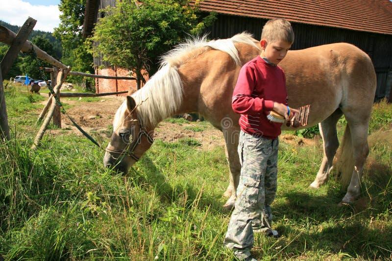 Criança e cavalo Haflinger foto de stock royalty free