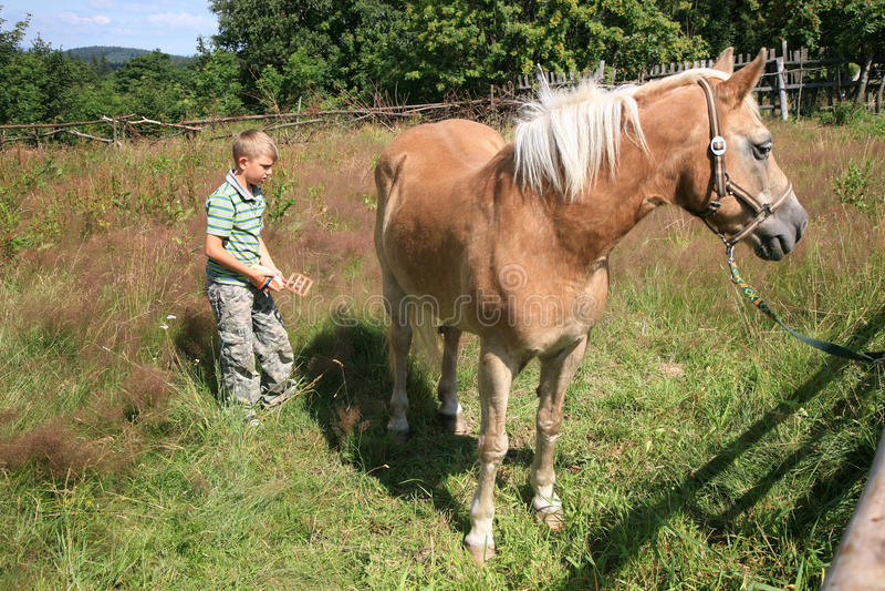 Criança e cavalo Haflinger fotos de stock
