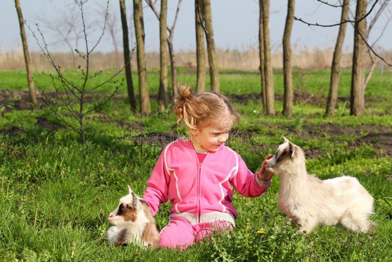 Criança e duas cabras pequenas fotos de stock