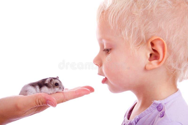 Criança e hamster fotografia de stock