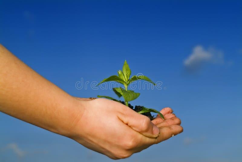 A criança entrega a planta da terra arrendada fotos de stock royalty free