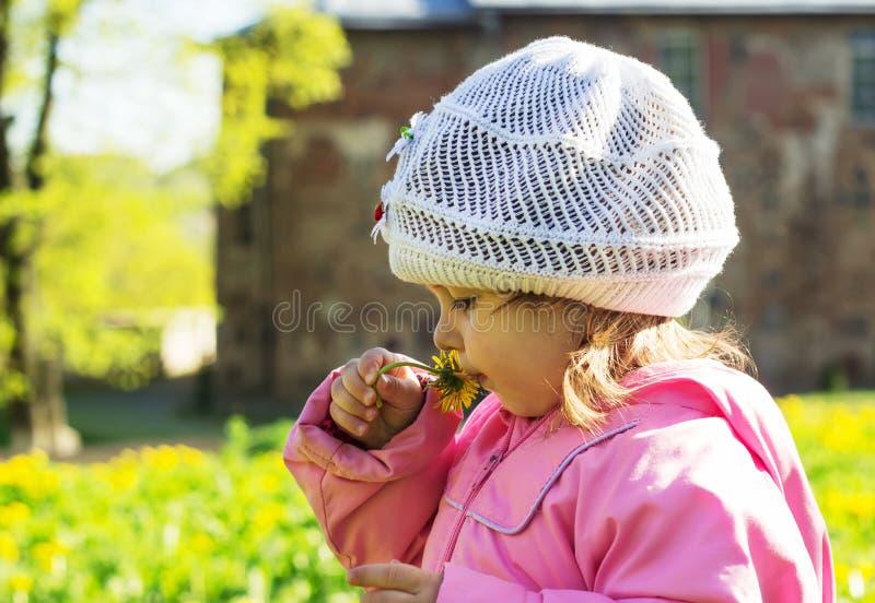 a criança está sentando-se na grama verde com dentes-de-leão amarelos imagens de stock