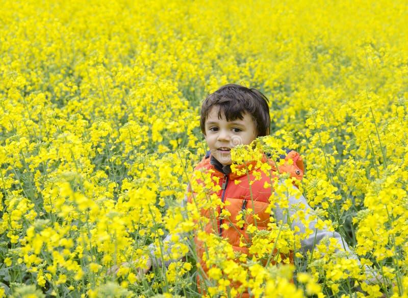 Criança feliz na colza fotografia de stock royalty free