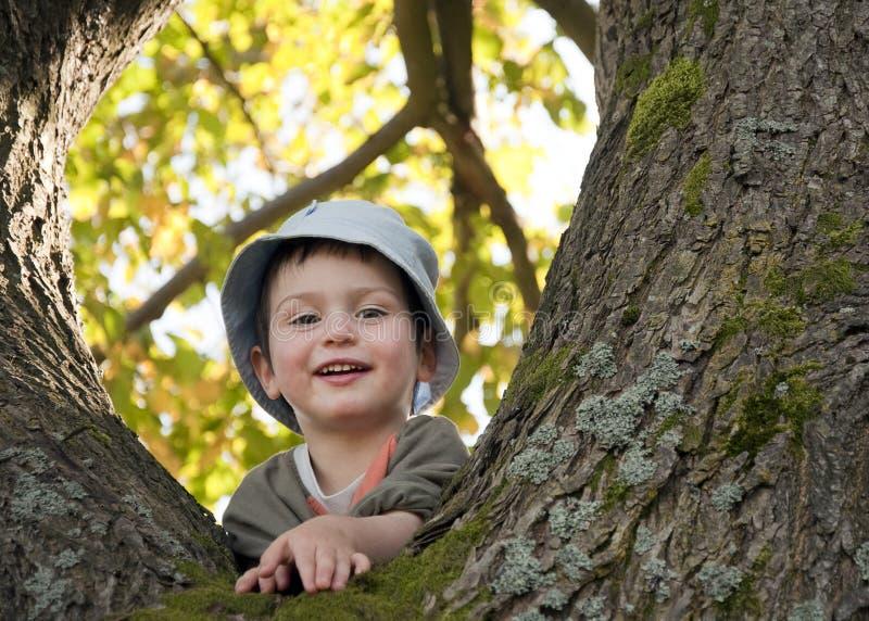 Criança na árvore imagem de stock