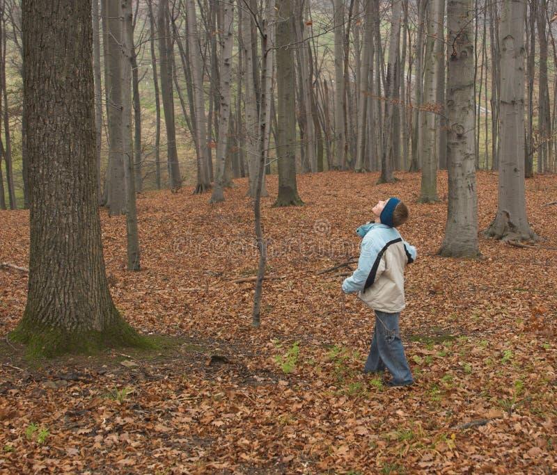 Criança na floresta fotos de stock royalty free