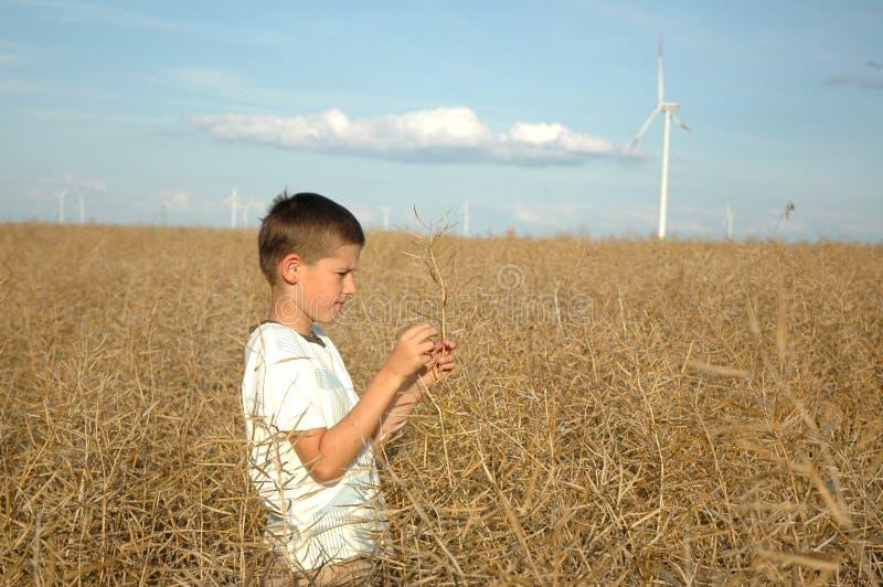 Criança nas centrais eléctricas do ofwind do campo foto de stock