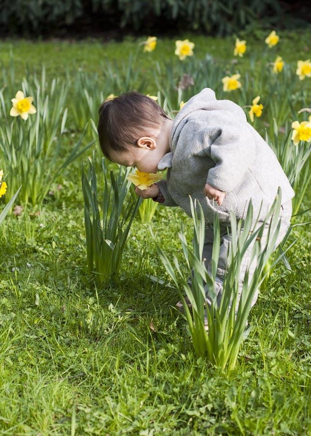 Criança nas flores fotografia de stock