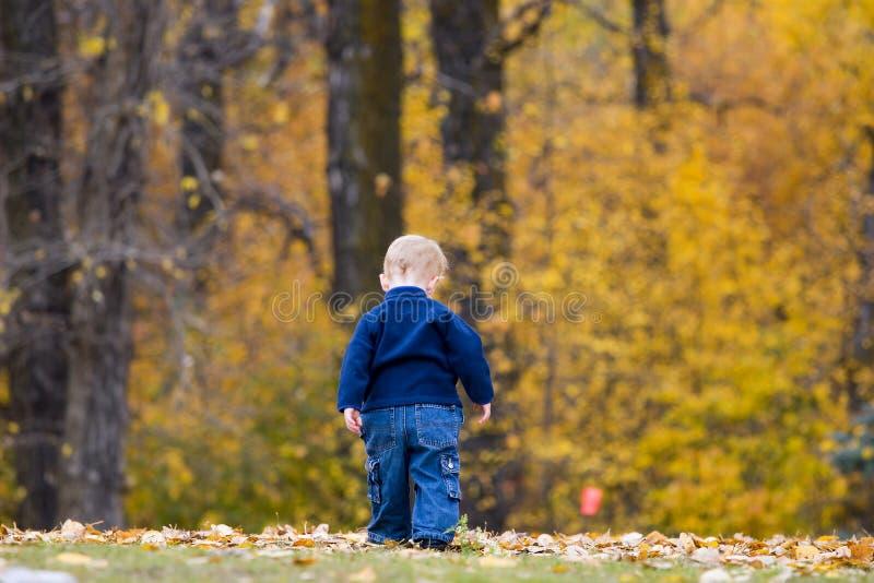 Criança nas folhas de outono foto de stock