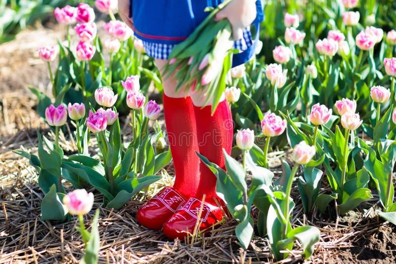 Criança no campo de flor da tulipa Moinho de vento em holland imagens de stock royalty free