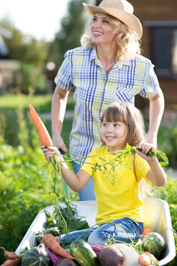 Criança no carrinho de mão do jardim com os legumes frescos exteriores A mãe está levando sua filha no carro imagem de stock royalty free