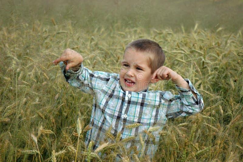 Criança no cereal fotografia de stock