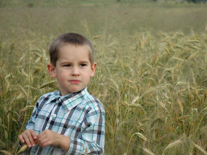 Criança no cereal imagens de stock