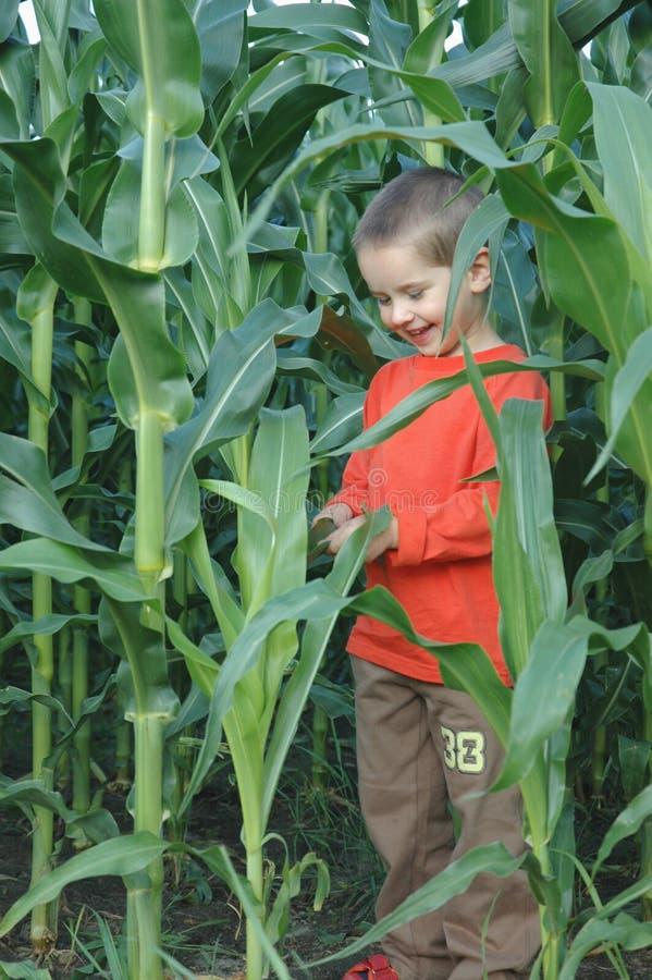 Criança no cereal imagem de stock