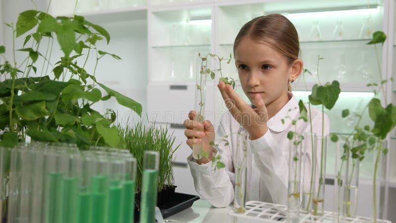 Criança no laboratório de química, turma de Biologia educacional da experiência da ciência da criança da escola fotografia de stock