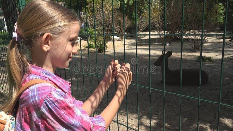 A criança no parque do jardim zoológico, cervo de observação da menina, crianças ama nutrir animais, animais de estimação importa foto de stock royalty free
