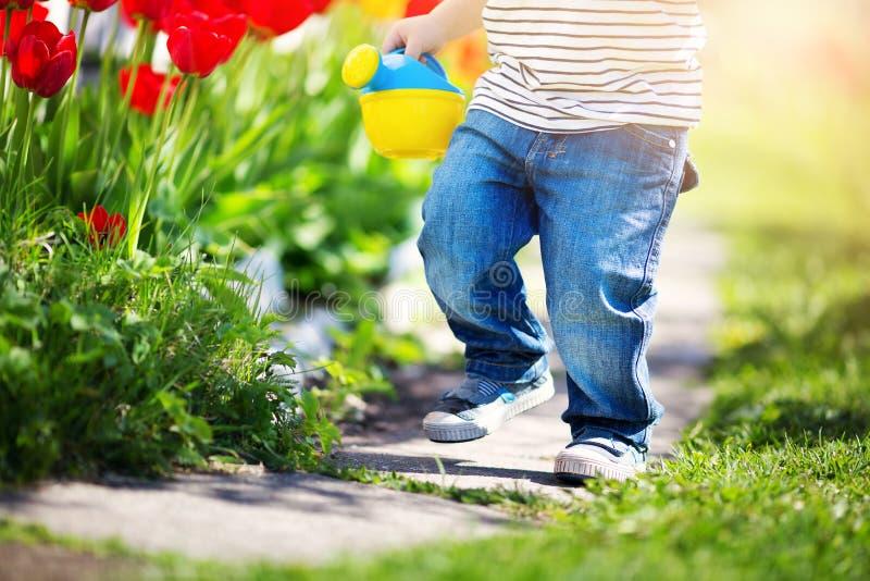 Criança pequena que anda perto das tulipas na cama de flor no dia de mola bonito foto de stock
