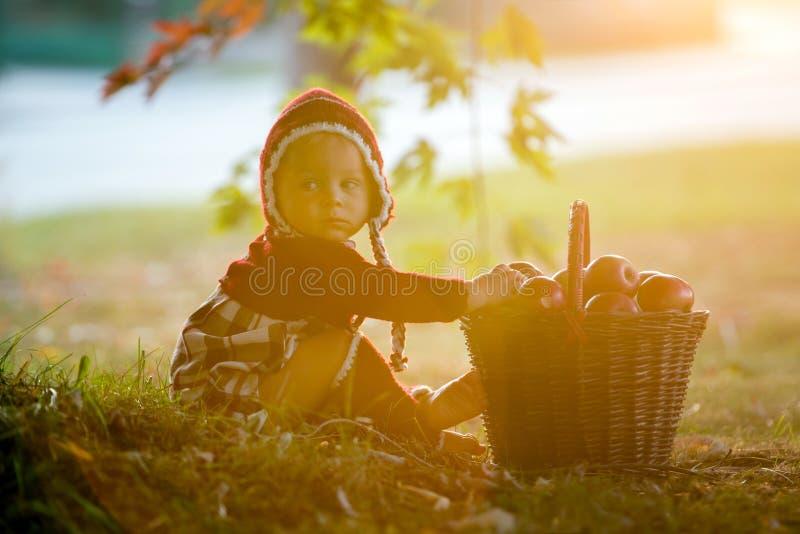 Criança que come maçãs em uma vila no outono Jogo pequeno do bebê fotos de stock