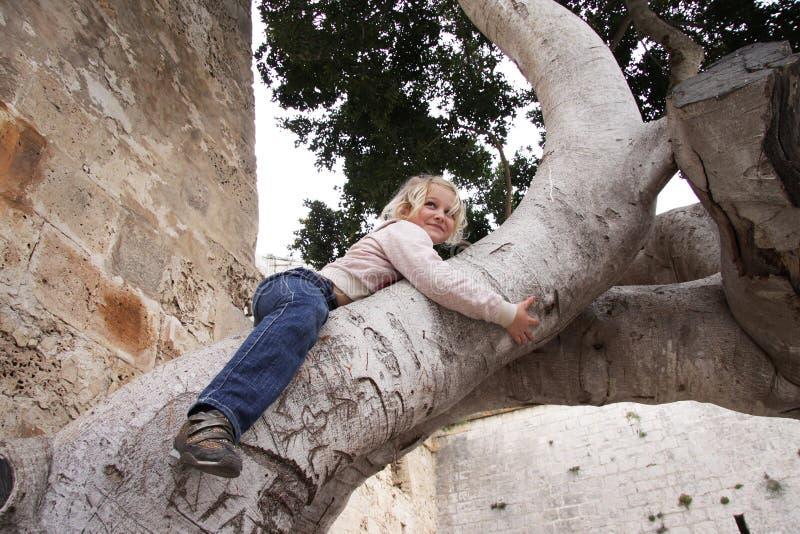 Criança que escala uma árvore imagens de stock royalty free