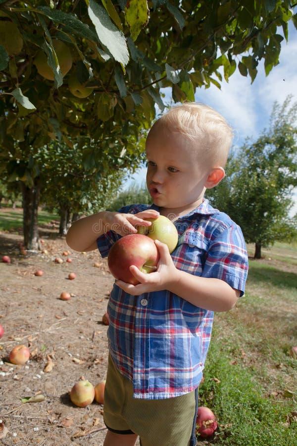 Criança que escolhe maçãs vermelhas e verdes fotografia de stock royalty free