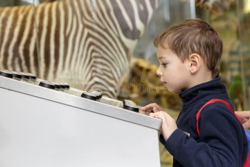Criança que estuda o birdsong fotos de stock royalty free