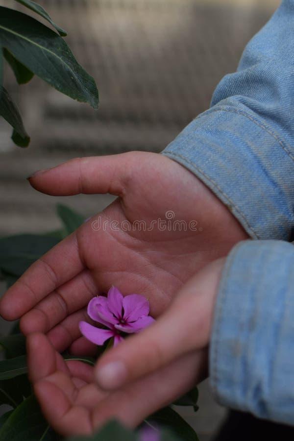 Criança que guarda uma flor roxa em suas mãos fotografia de stock