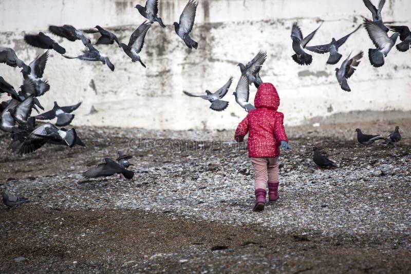 Criança que joga com pássaros imagens de stock