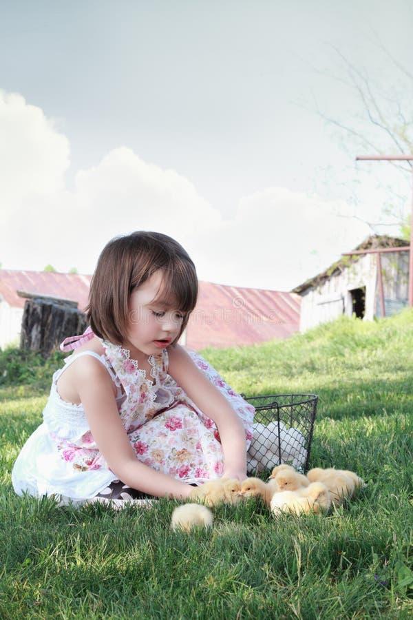 Criança que joga com pintainhos foto de stock