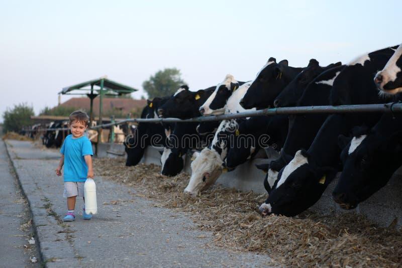 Criança que leva seu leite da exploração agrícola fotos de stock