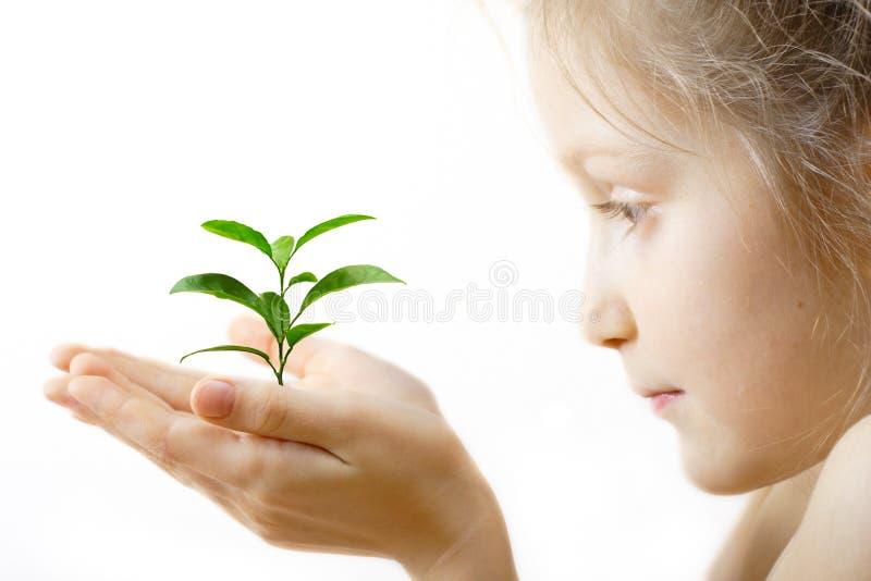 Criança que prende um sprout imagem de stock