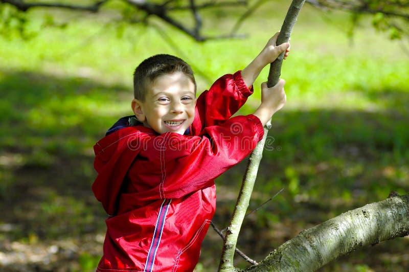 Criança que senta-se em uma árvore imagem de stock