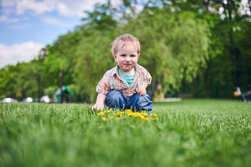 Criança que senta-se no gramado e nos olhares verdes nos dentes-de-leão amarelos Dia ensolarado imagem de stock