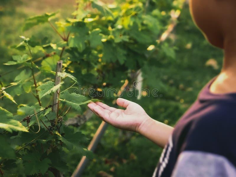 Criança que toca nas folhas da vinha imagem de stock royalty free