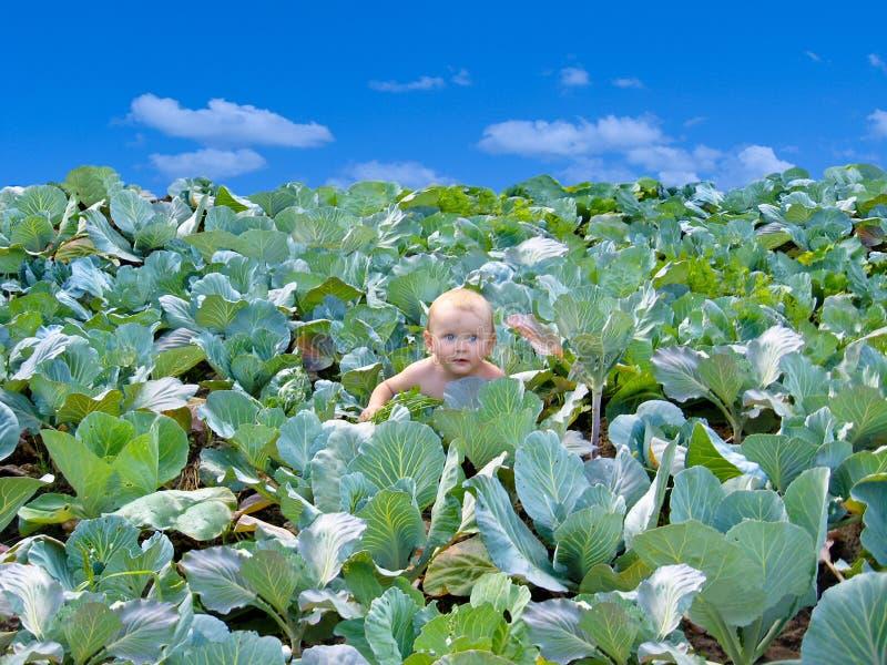 Download A Criança Recém-nascida Encontrada Na Couve Foto de Stock - Imagem de menino, crianças: 26521578