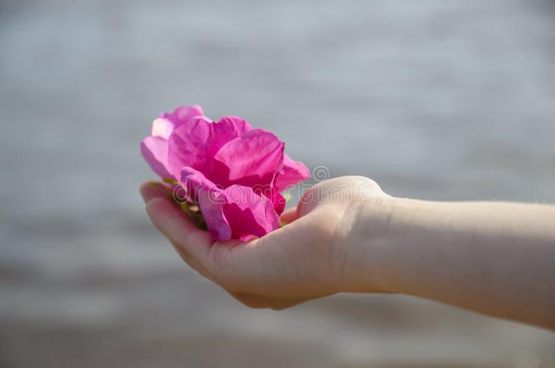 Crianças, as mãos delicadas das mulheres com botões e as pétalas de flores cor-de-rosa selvagens imagens de stock royalty free