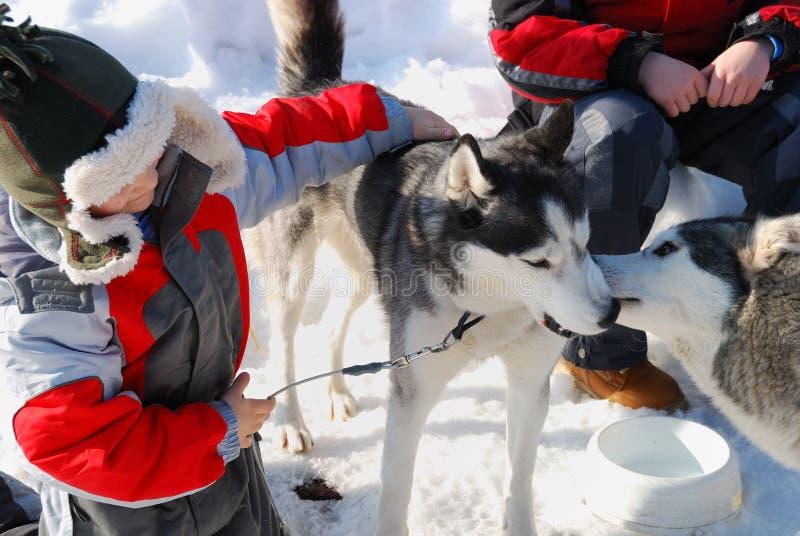 Crianças com cães roncos imagens de stock royalty free