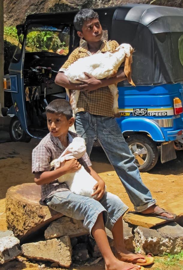 Crianças de um fazendeiro local em Sri Lanka fotografia de stock