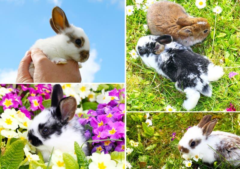 Crianças dos coelhos imagem de stock