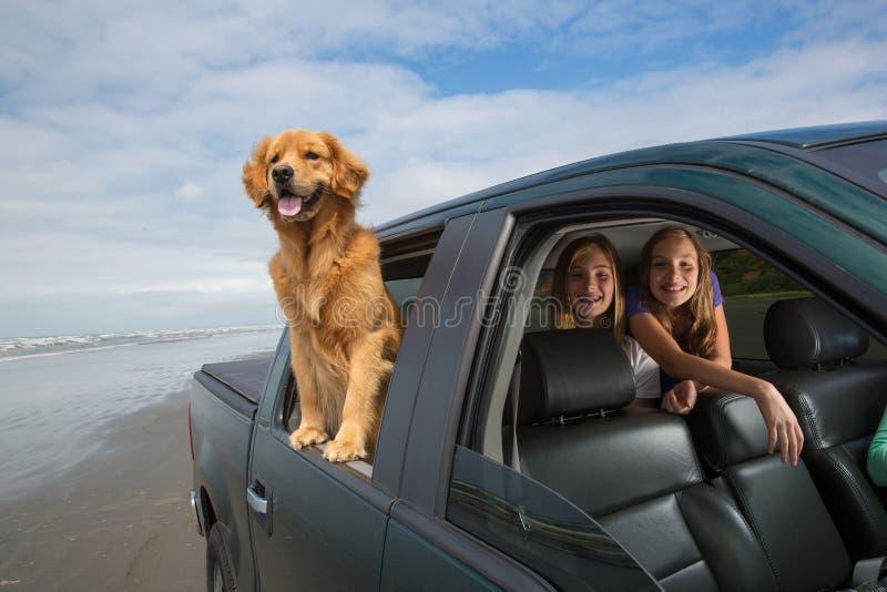 Crianças e um cão no banco traseiro foto de stock royalty free