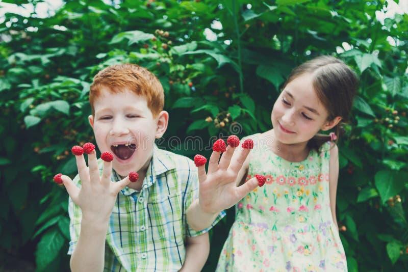 Crianças felizes que comem a framboesa dos dedos no jardim do verão imagem de stock